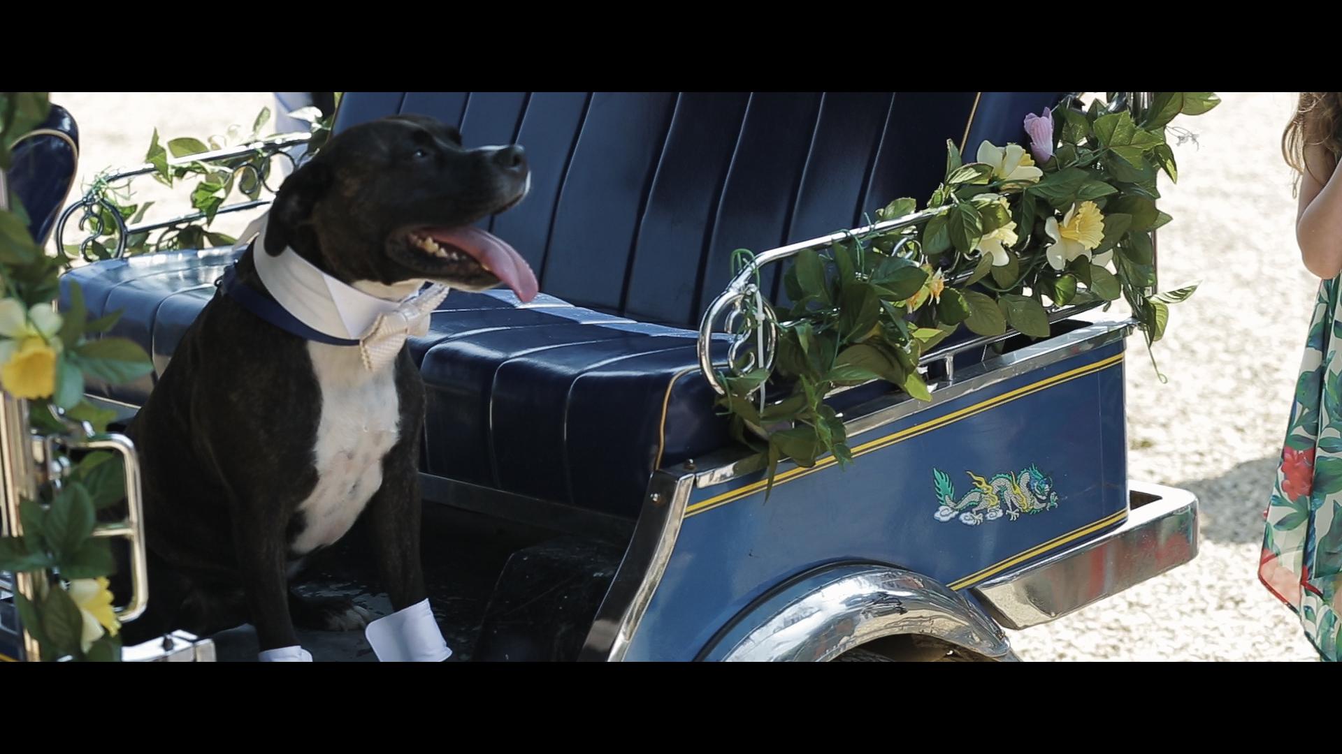 Wedding video South Farm